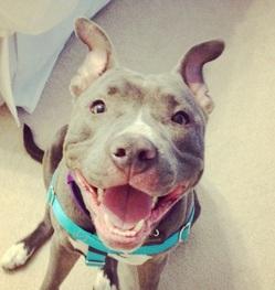 Bullseye Dog Rescue Facebook